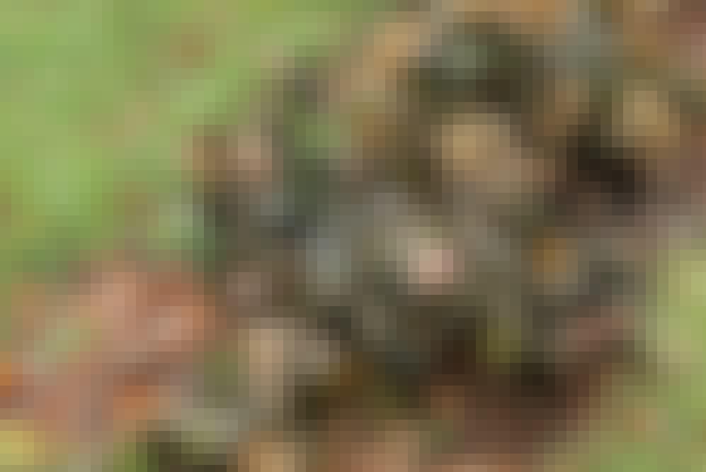 74066_SE_B_15_2009_2_3.jpg