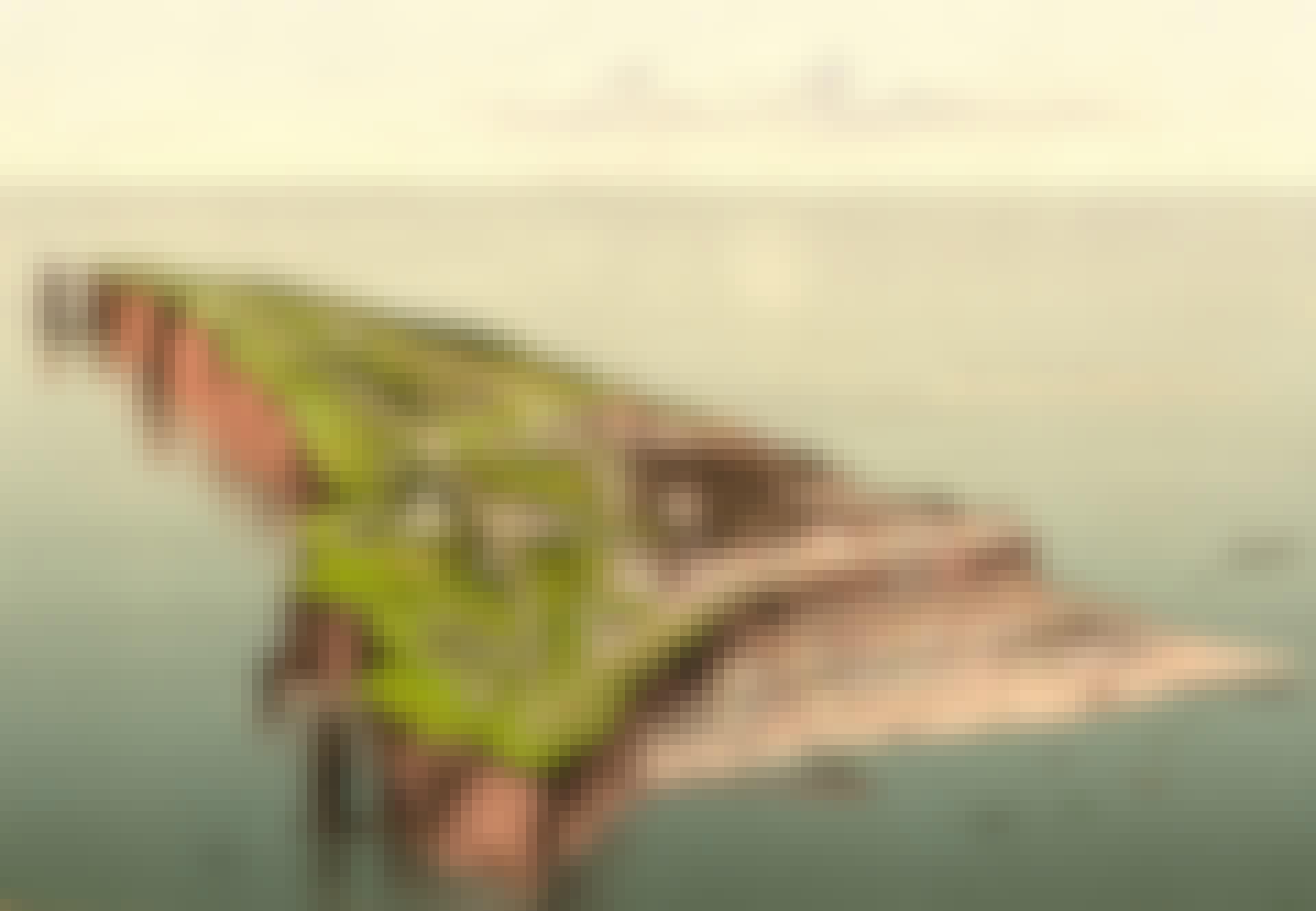 Helgoland ø Tyskland
