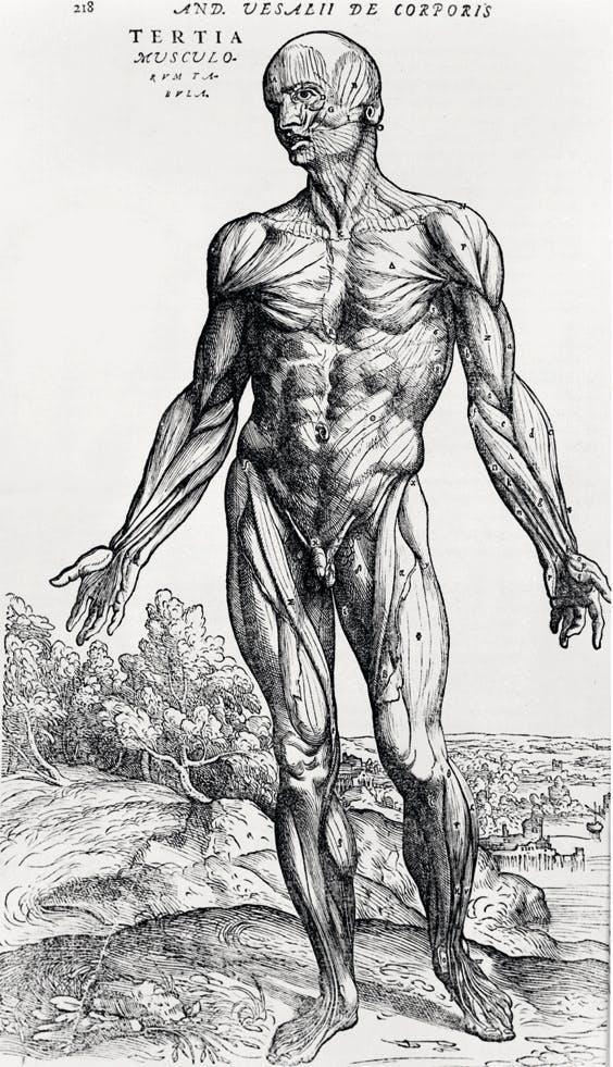 Vesalius' bog fra 1543 er fyldt med detaljerede tegninger af menneskekroppen.