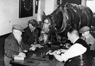 Hesten Sam er stamgæst