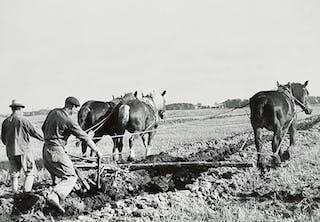 Plöjning med häst någonstans i Sverige, 1900-tal, odaterad bild.