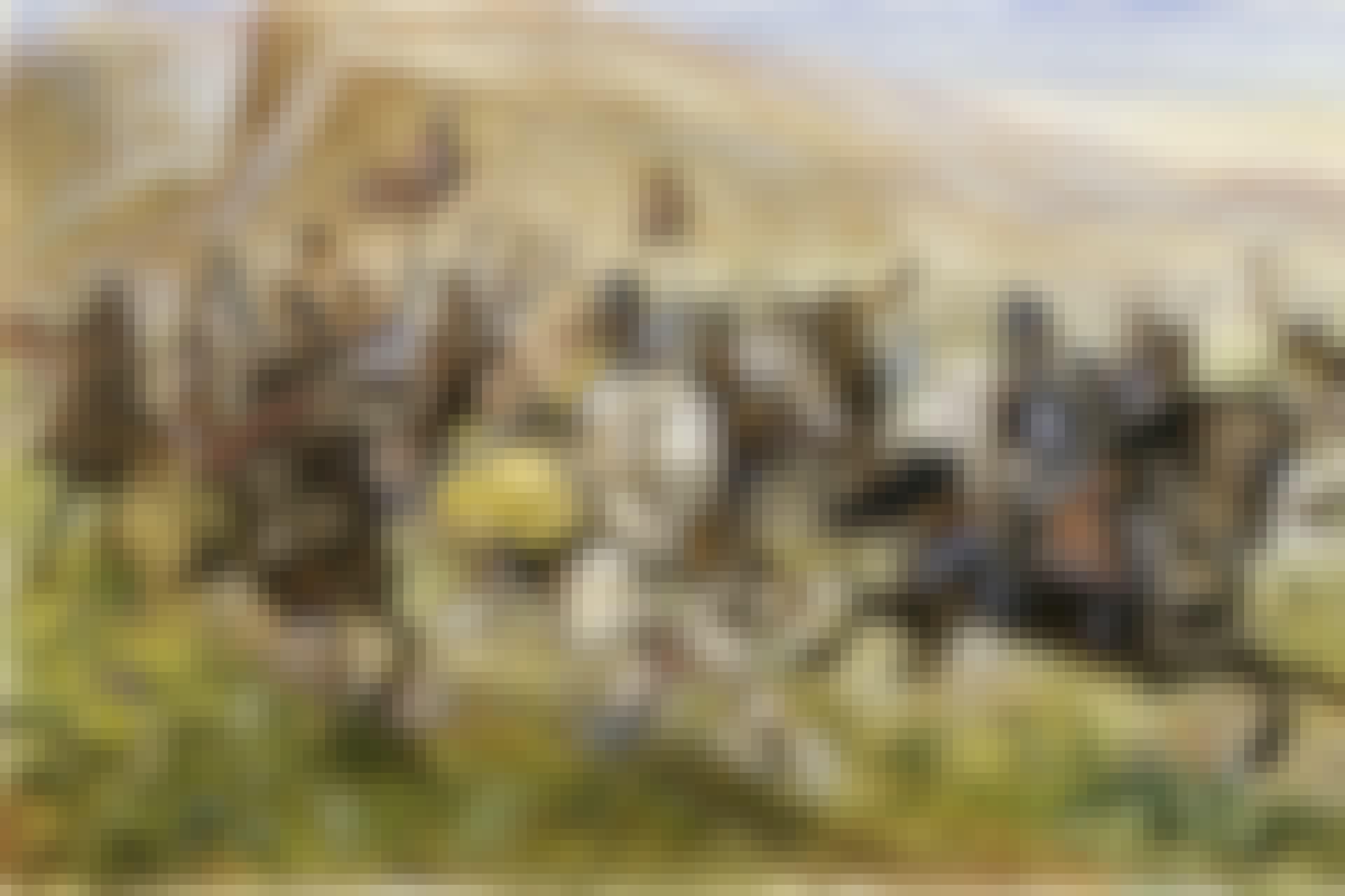 Attilas hunner i galopp på målning.