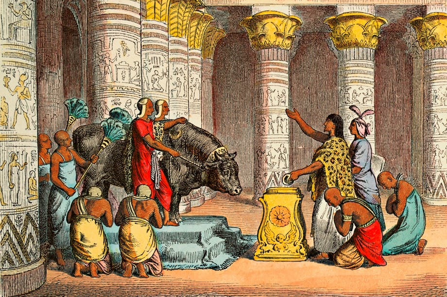 Tempeltjuren Apis i templet i Memfis.