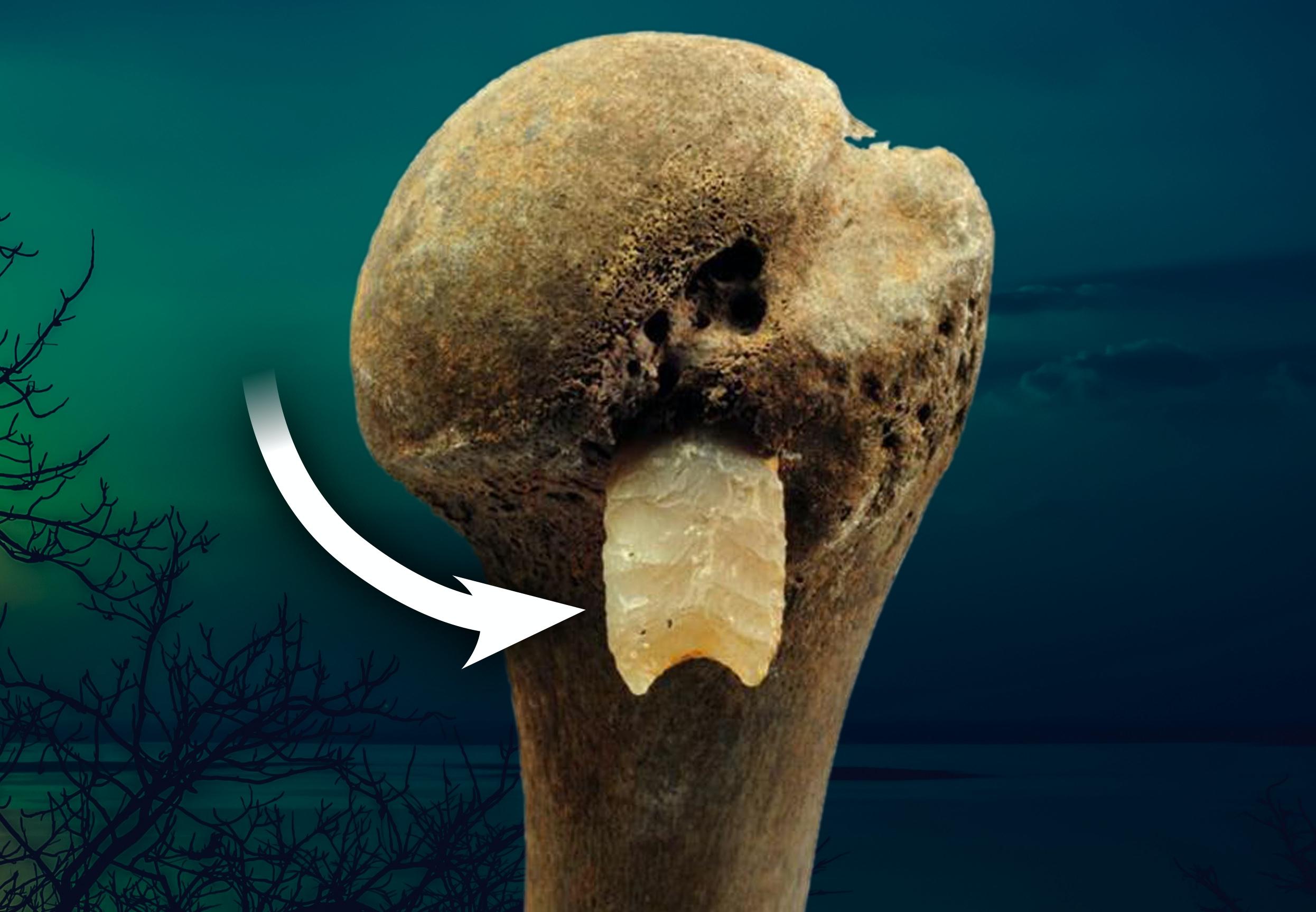 två sätt att datera fossil och förklara både