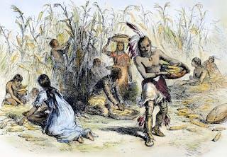 Indianerne boede i højhuse, holdt får og skød hvaler