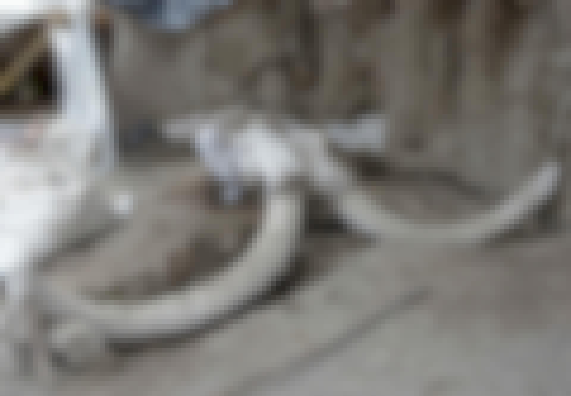 Mammut Mexico fælde