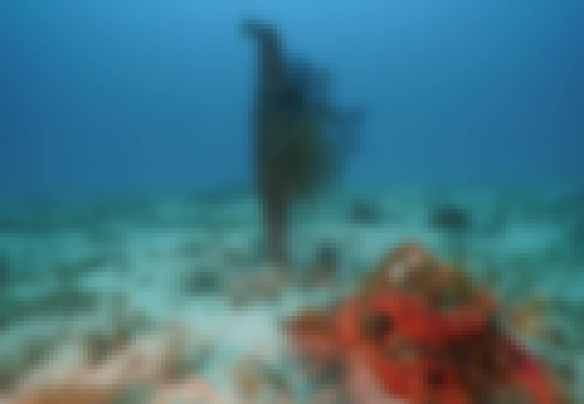 Chuuk-lagunen mikronesien