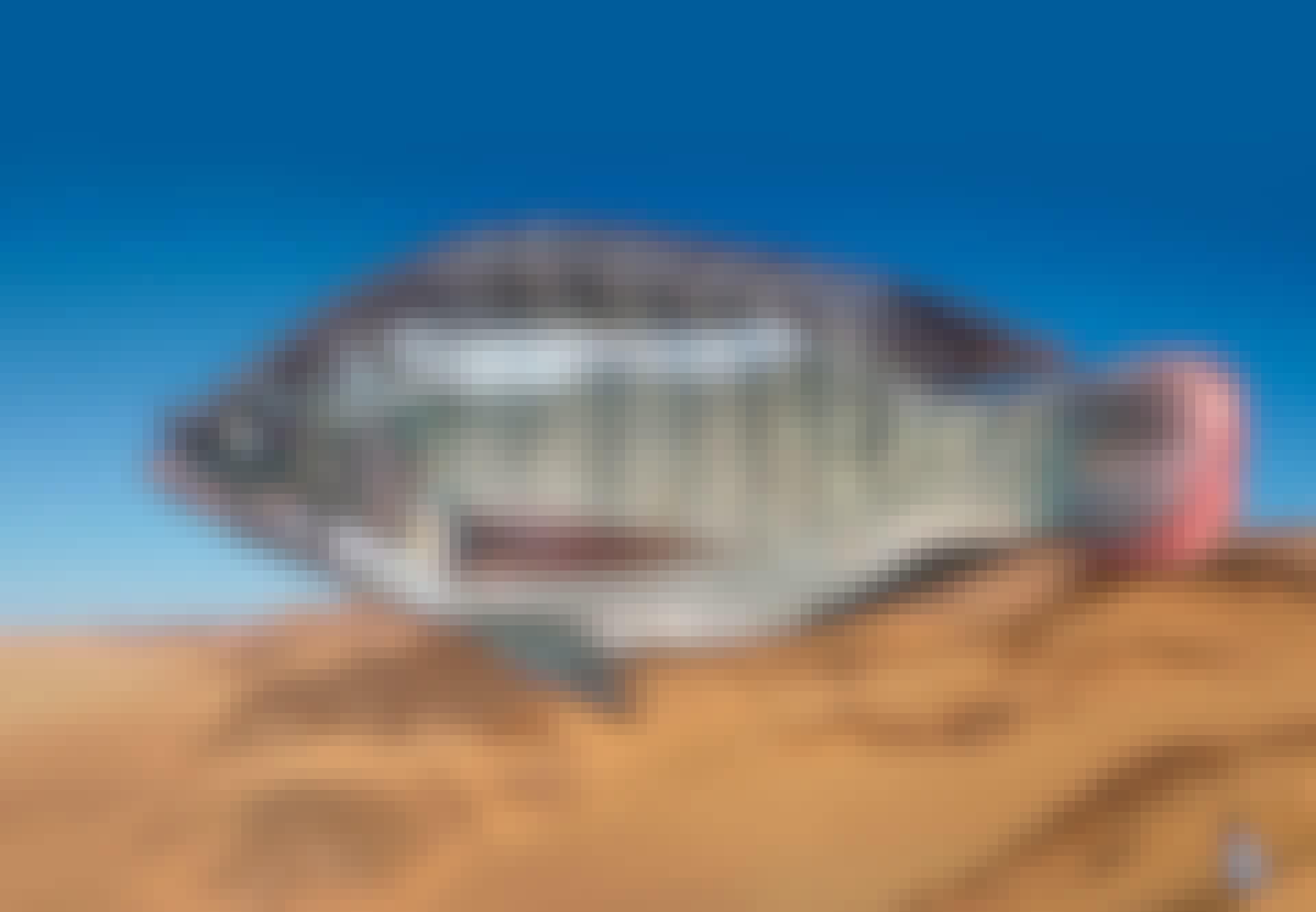 Sahara fisk