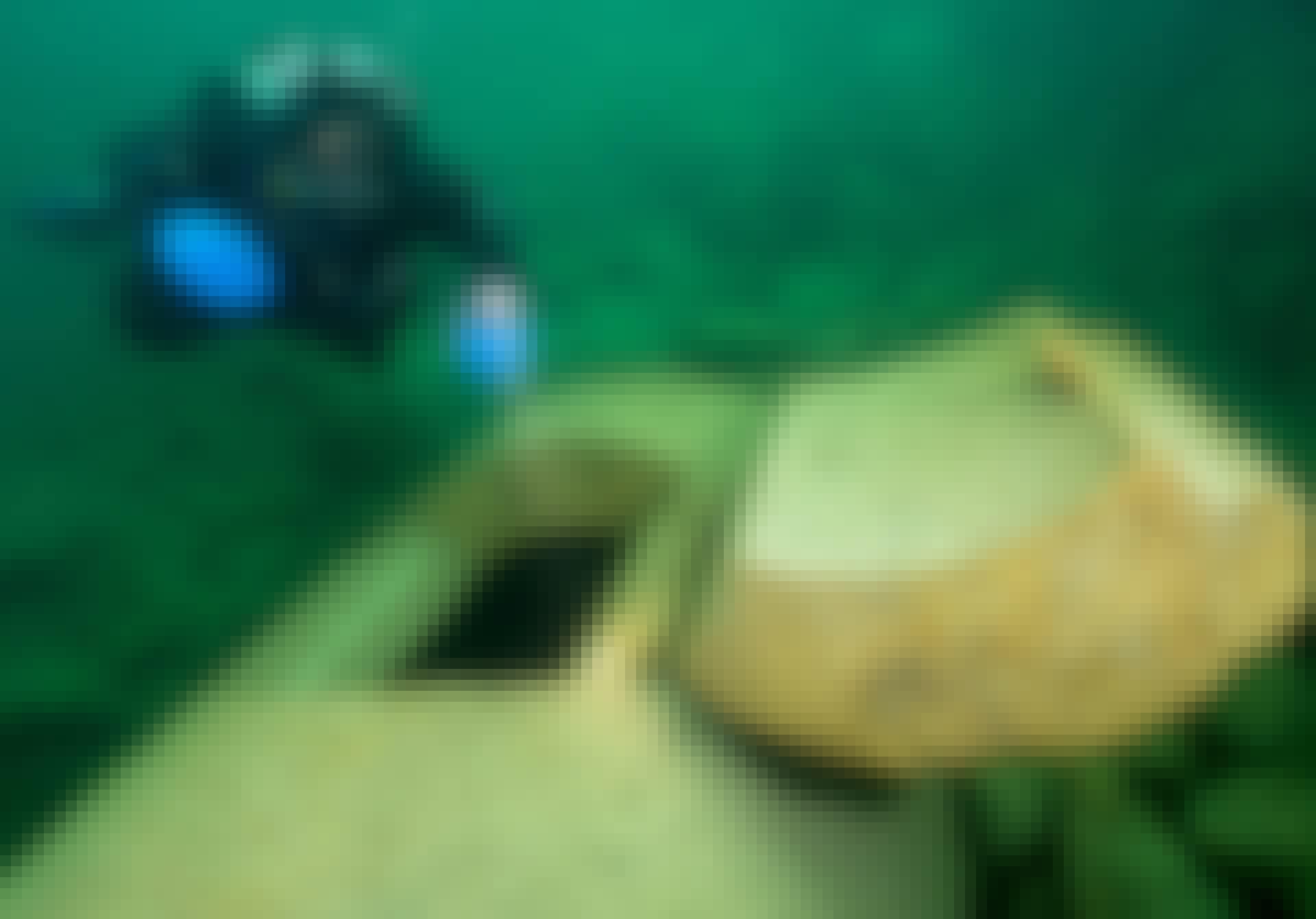 Bunker nazister sø