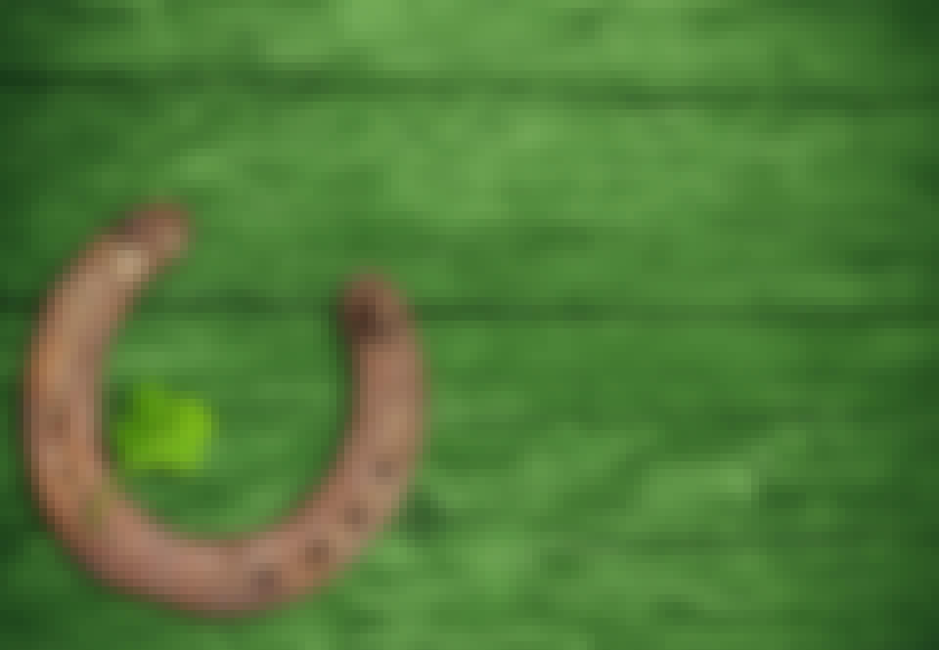 Trekløver og hestesko på grønn bakgrunn