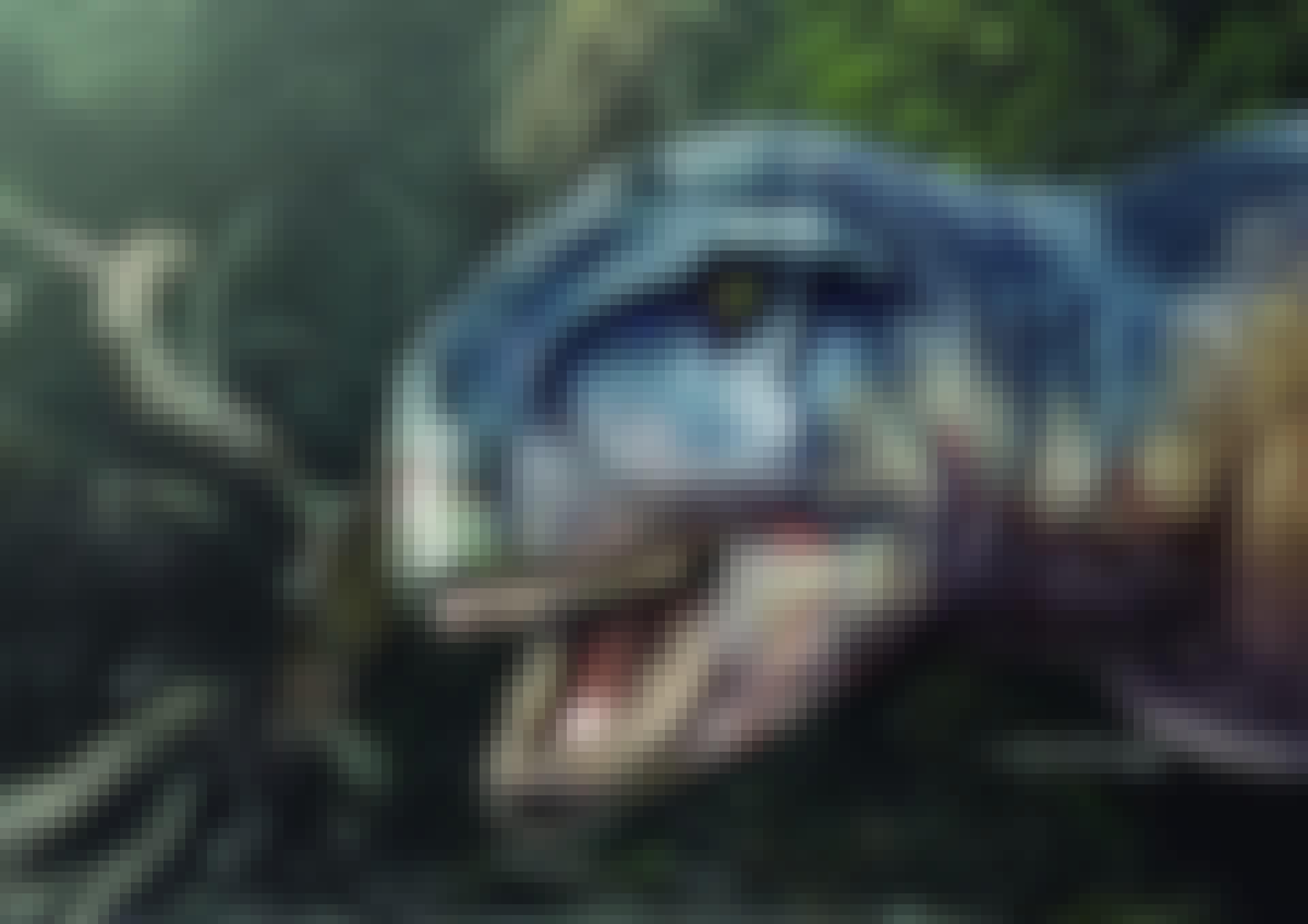 Llukalkan aliocranianus, familielid van T-rex