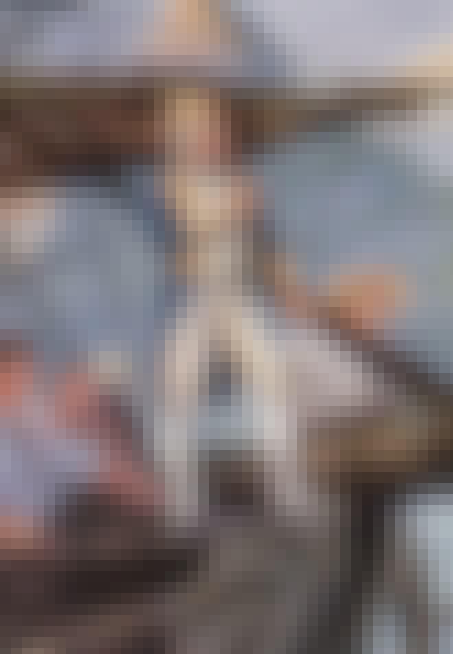 James Cook med kikare
