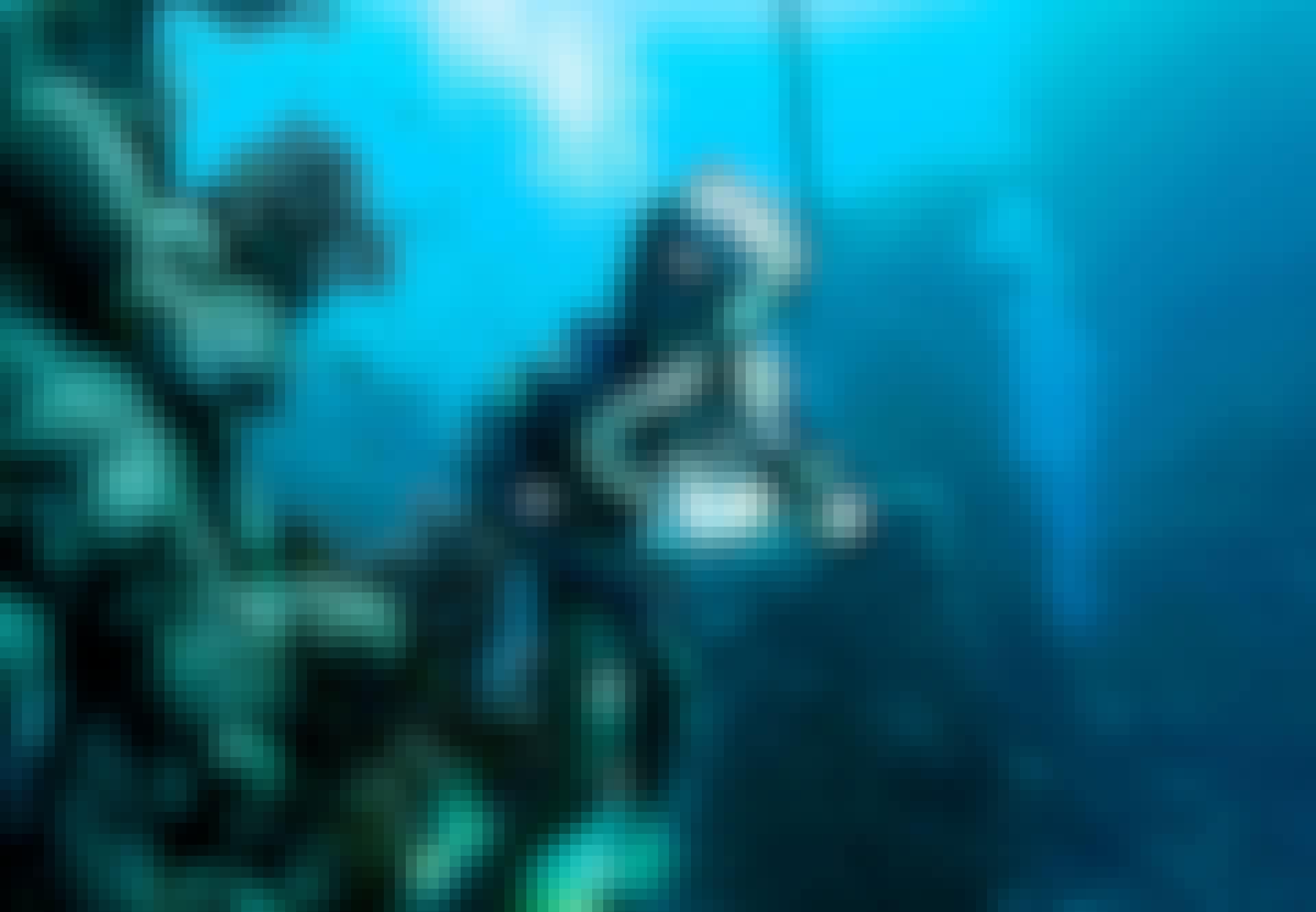 Duiker verkent de zee