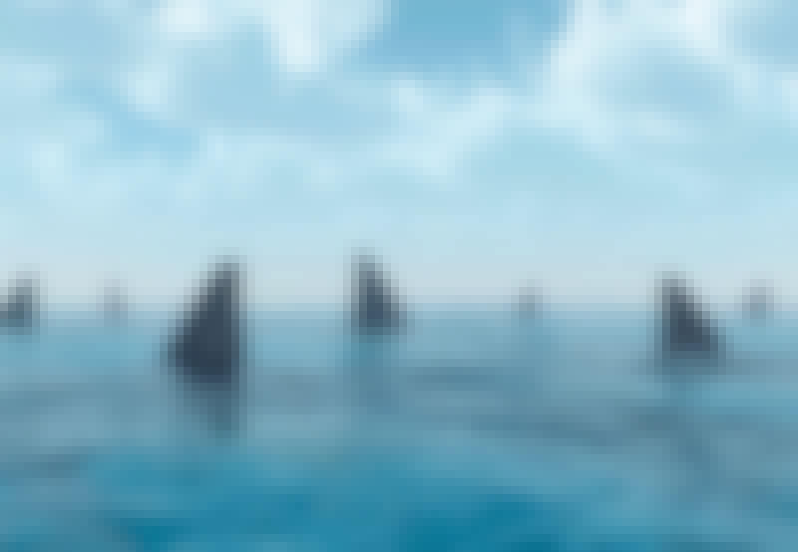 Haifinner i havet