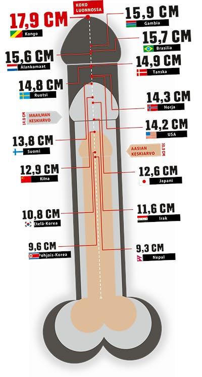 Maailman pisin penis keskimääräinen