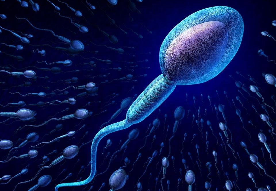 sperma bra för hyn