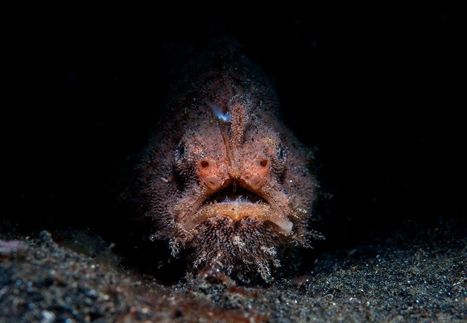 verdens dypeste havområde