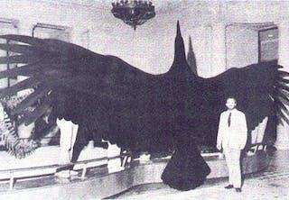 Megalodon var utstyrt med 15 cm lange tenner og har blitt kalt et lokomotiv med munnen full av slaktekniver.