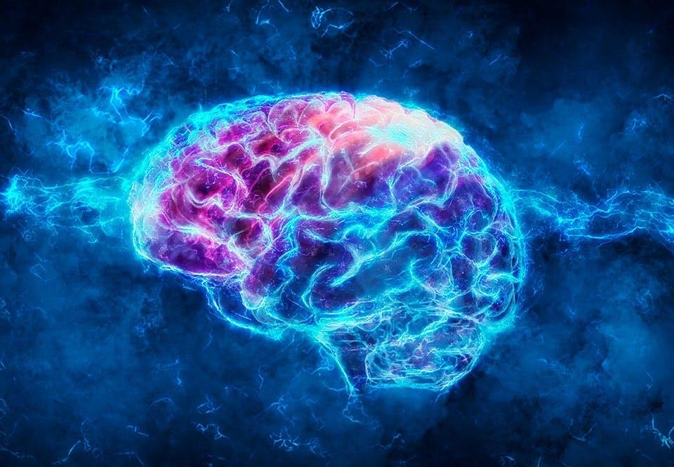 Hjernen