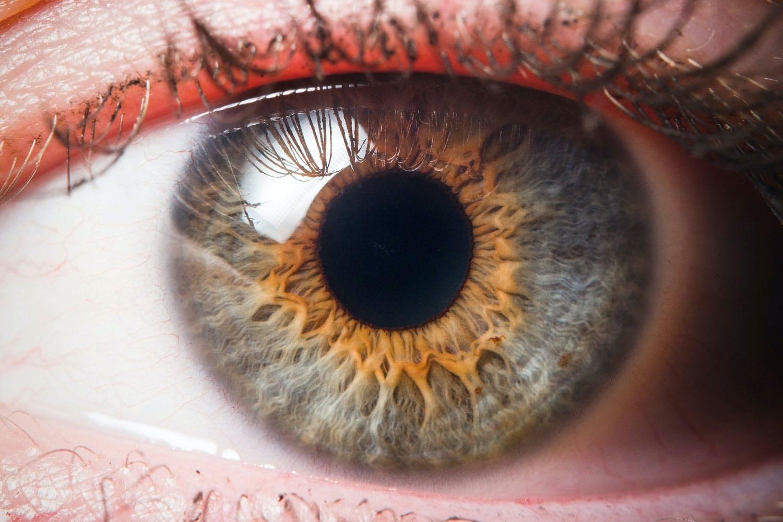 fakta om ögat