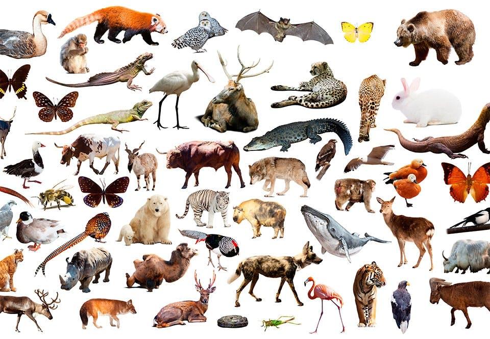 Viktiga djur