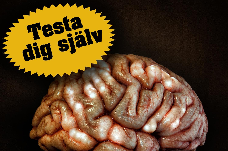 Hjernen test