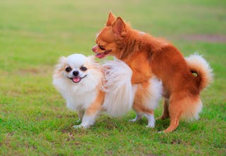 paring hunder