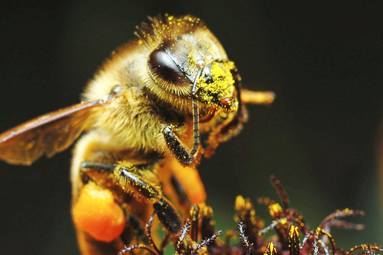Mehiläinen top