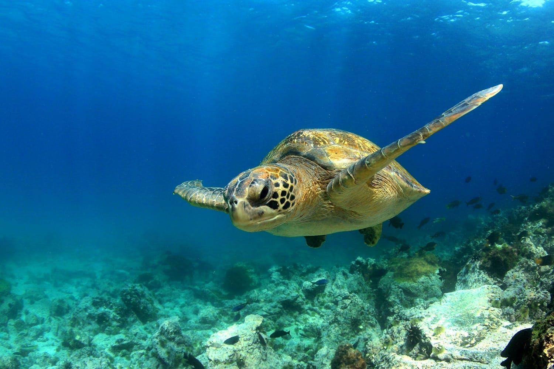 Galapagos top