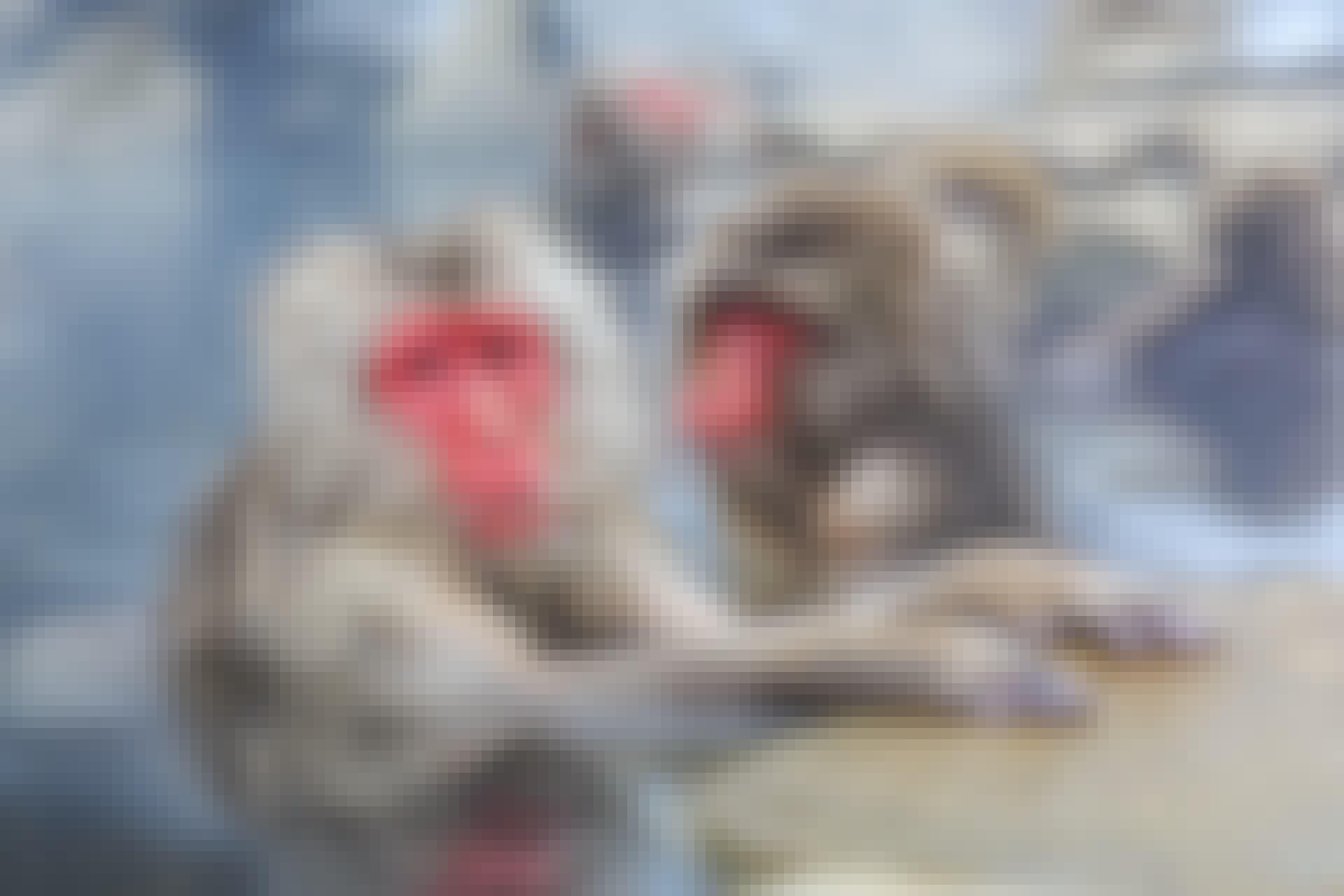 dierenrijk topfoto