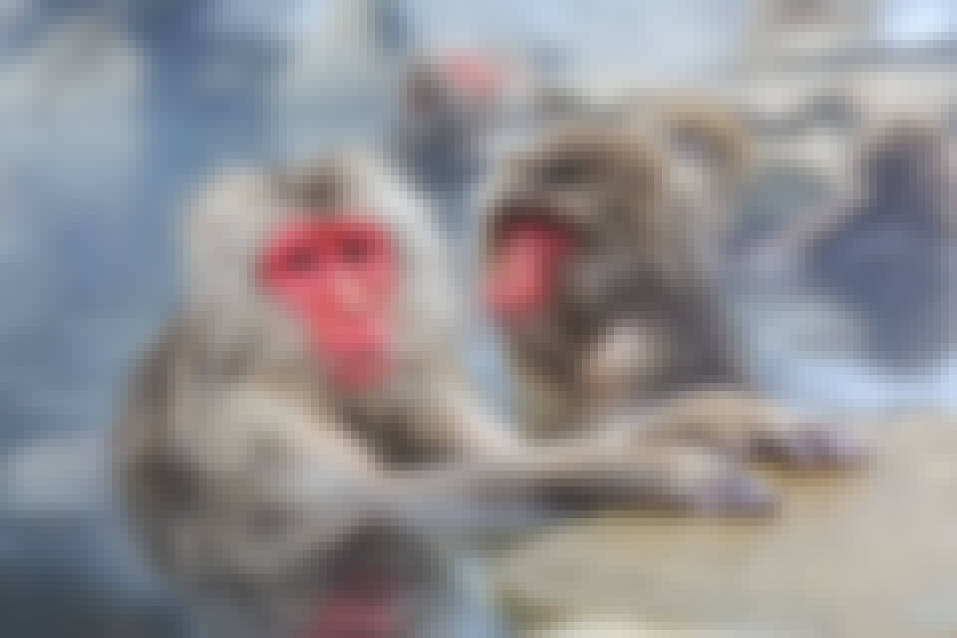 dyreriget topbillede