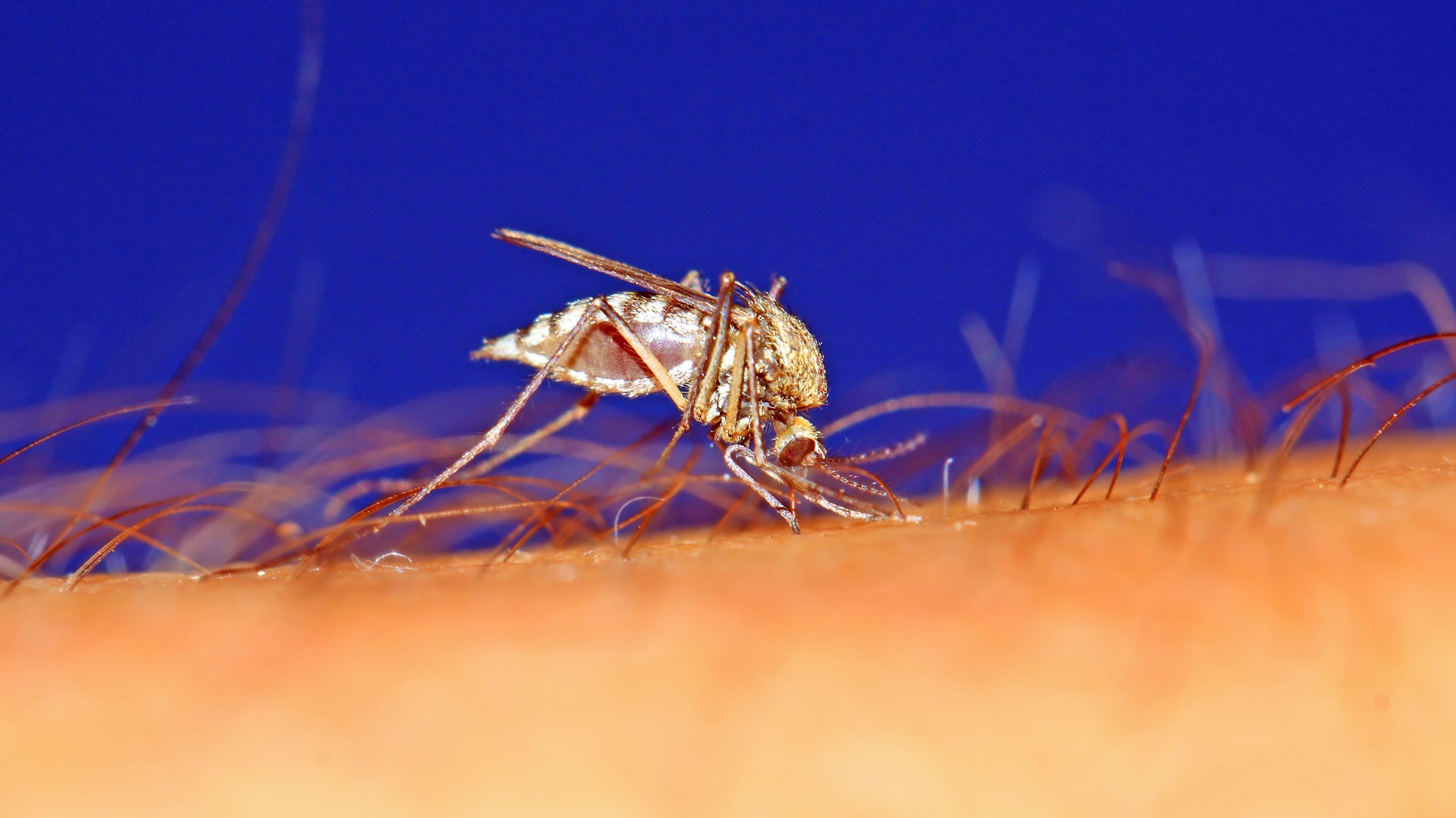 Muggen 1
