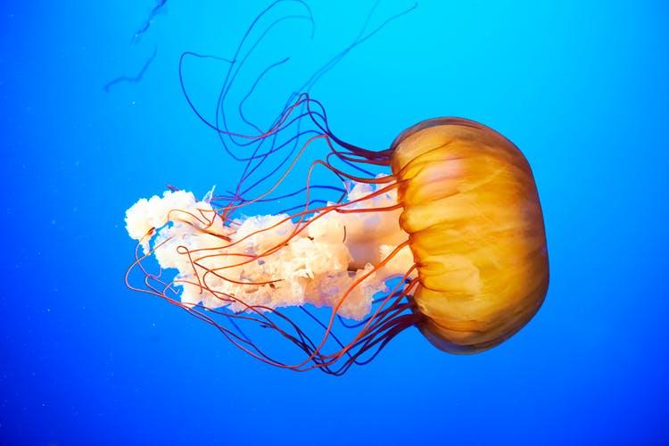 Meduusat ovat hengenvaarallisia