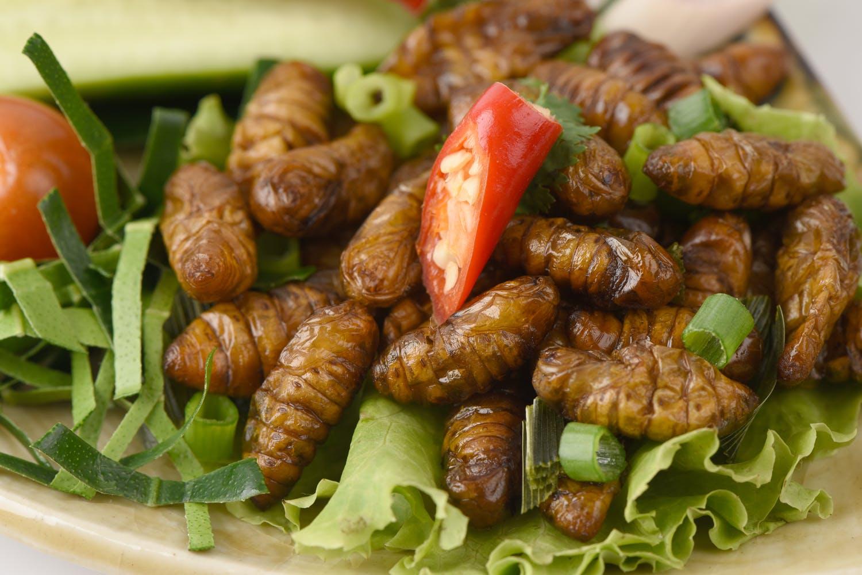 Hyönteisiä ruoaksi – YK hyväksyy ötökät ruokapyramidiin