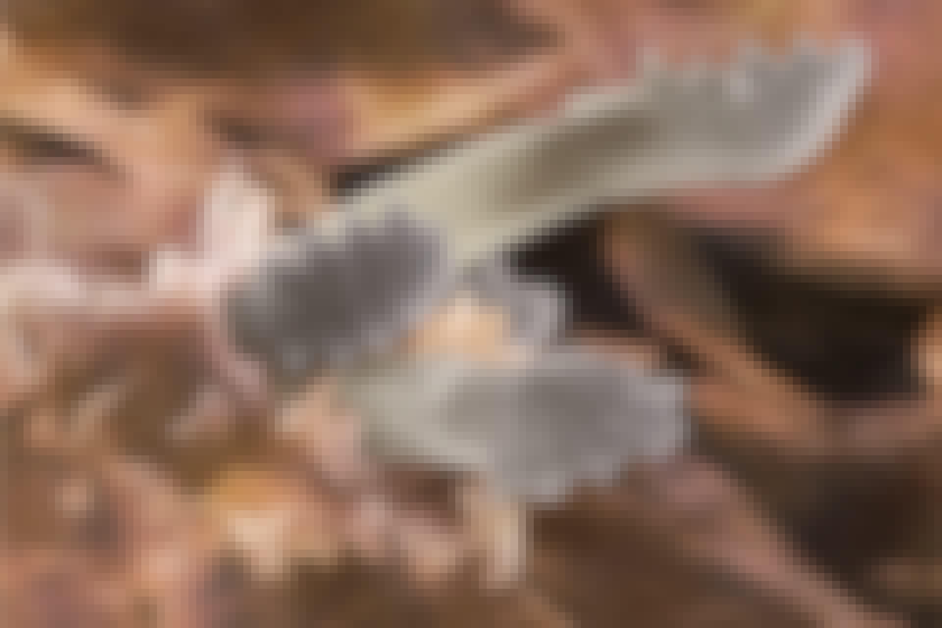 parasitter ansigtsmide 1