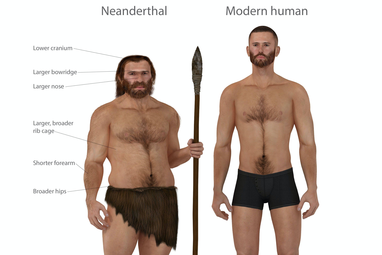 Det betyder parring med neandertalere