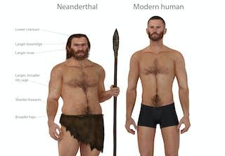 Det betyder parning med neandertalare