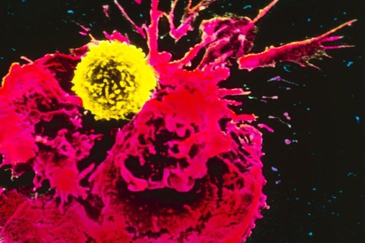 immunterapi t celle angriber