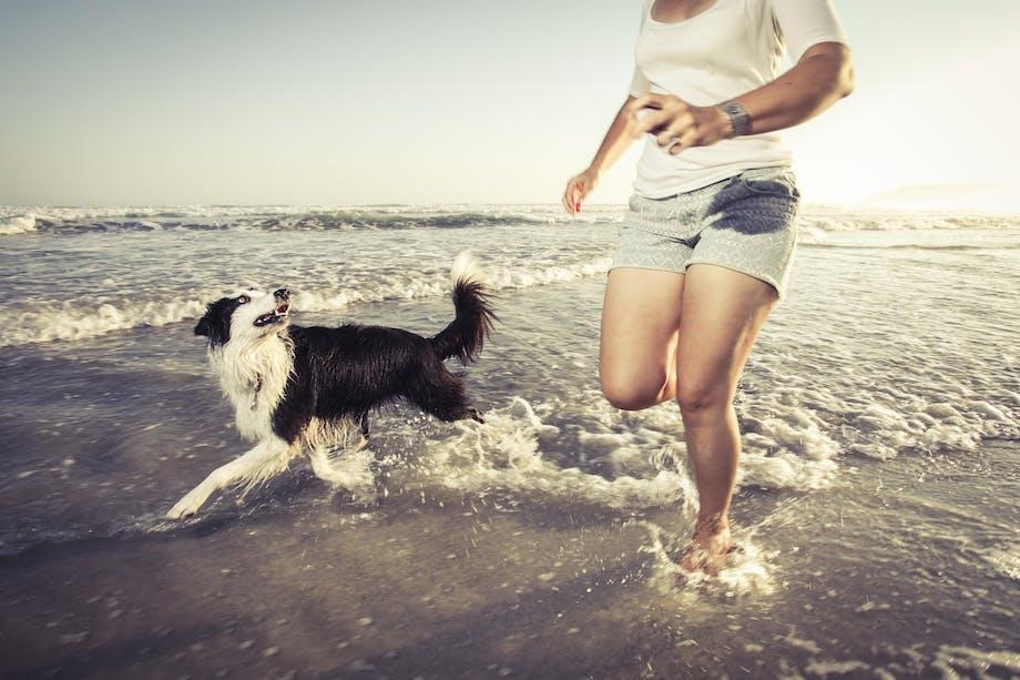 Hund i vand med pige
