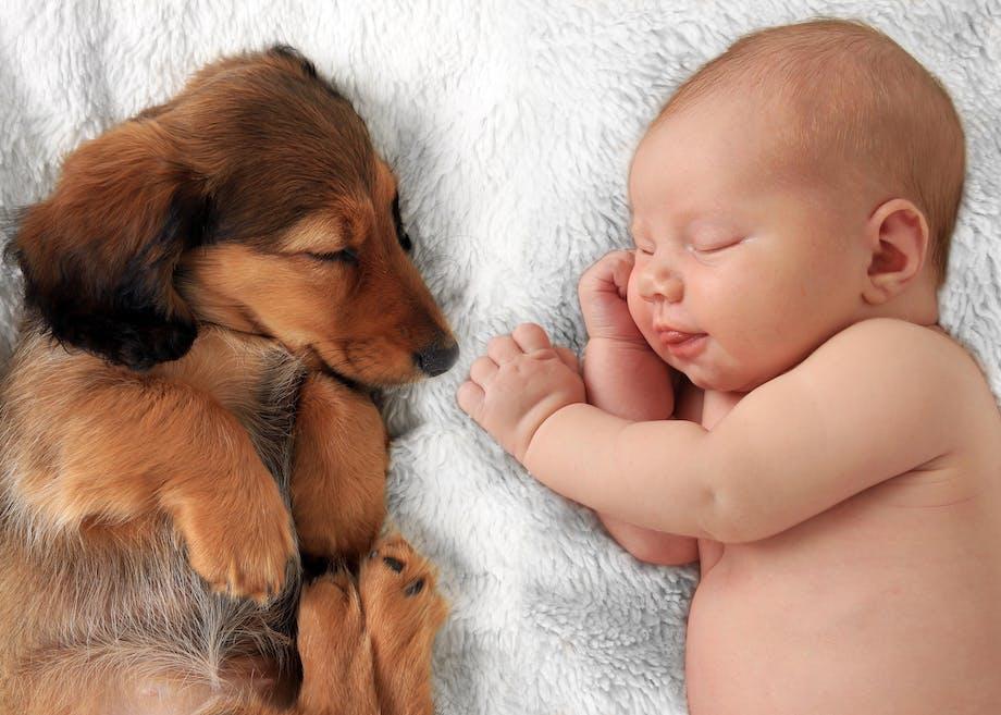 Hund med baby