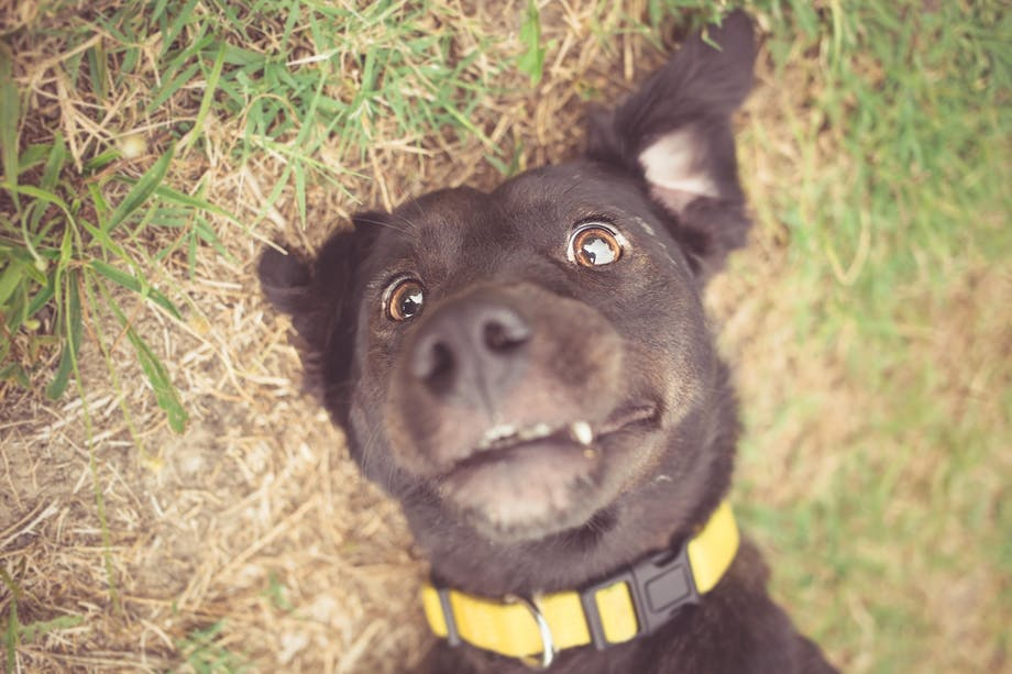 Hund fjollet udseende