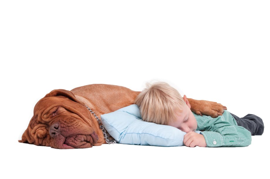 Hund sover med dreng