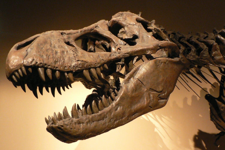 dinosaurer t rex top
