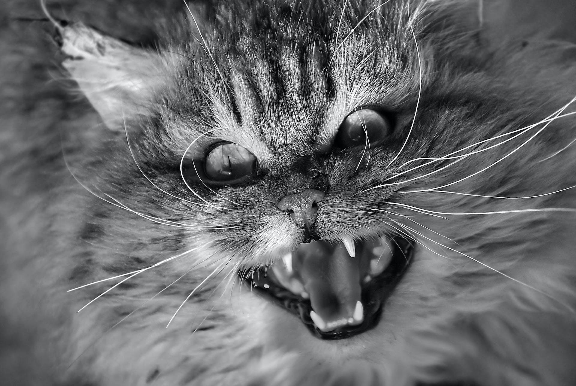 Kissa paha