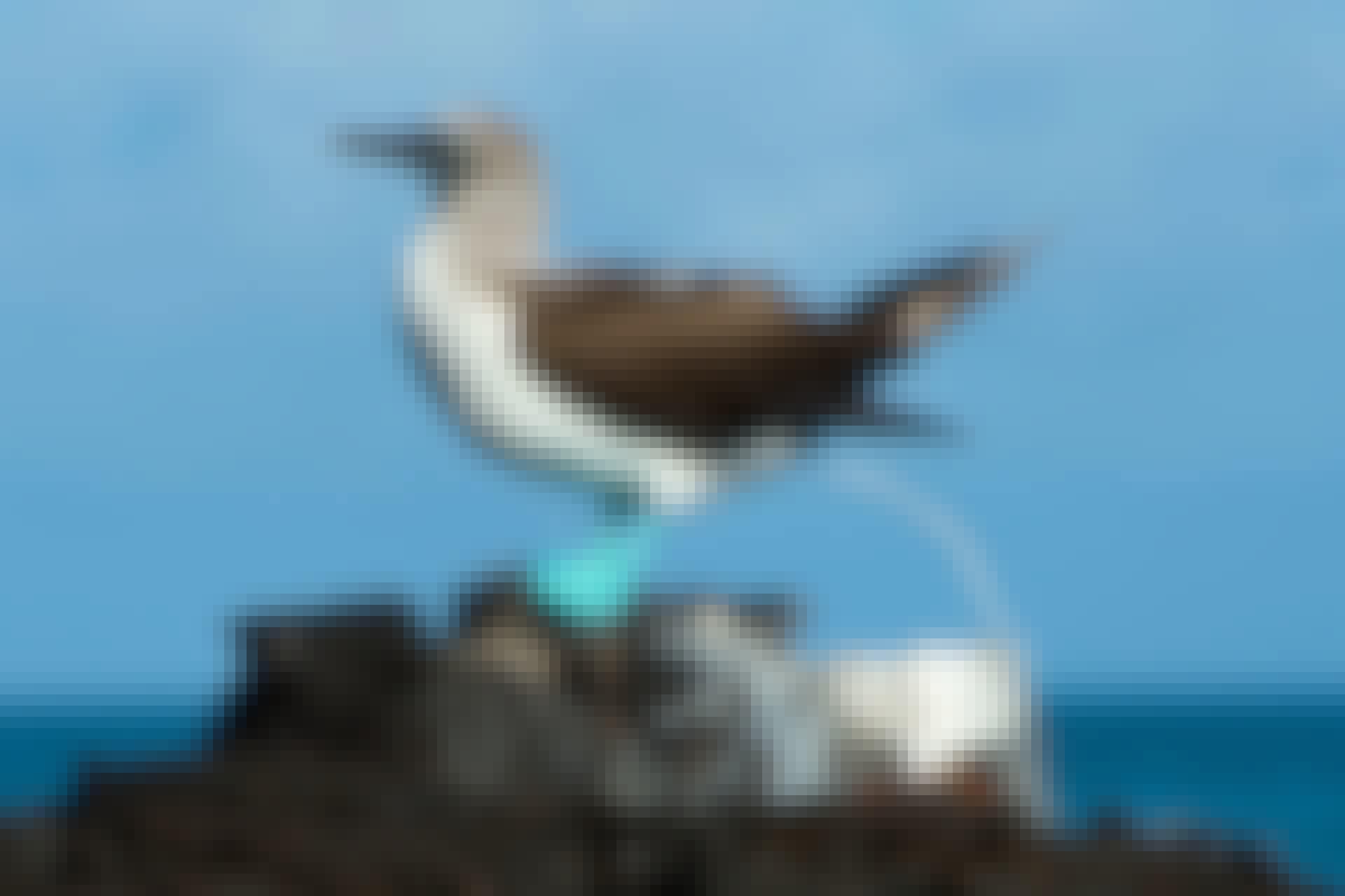 Hvorfor er fugleklatter hvide?
