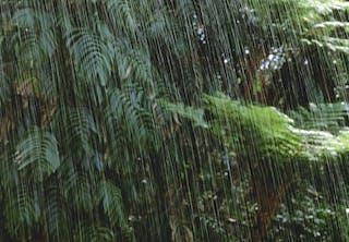 Sataako sademetsässä alinomaa?