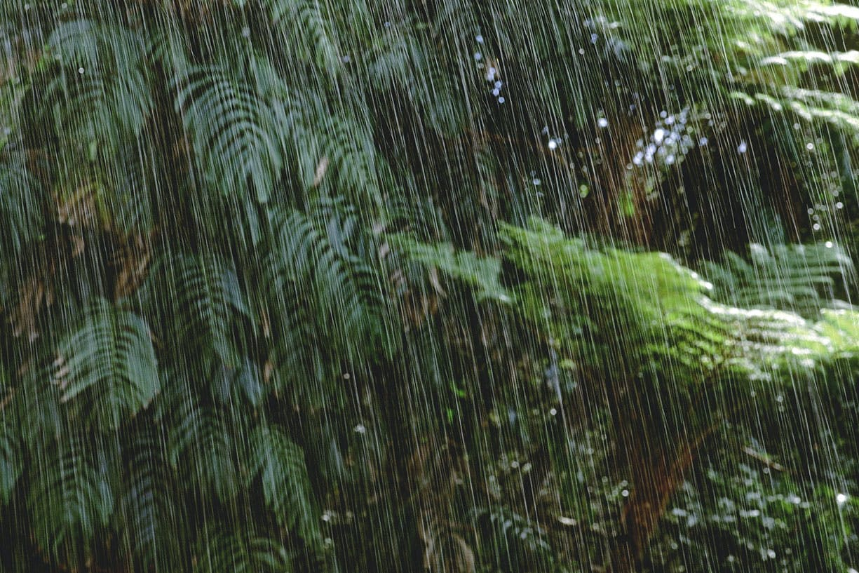 Regner det alltid i regnskogen?