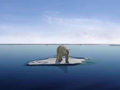 Isbjørn islflage