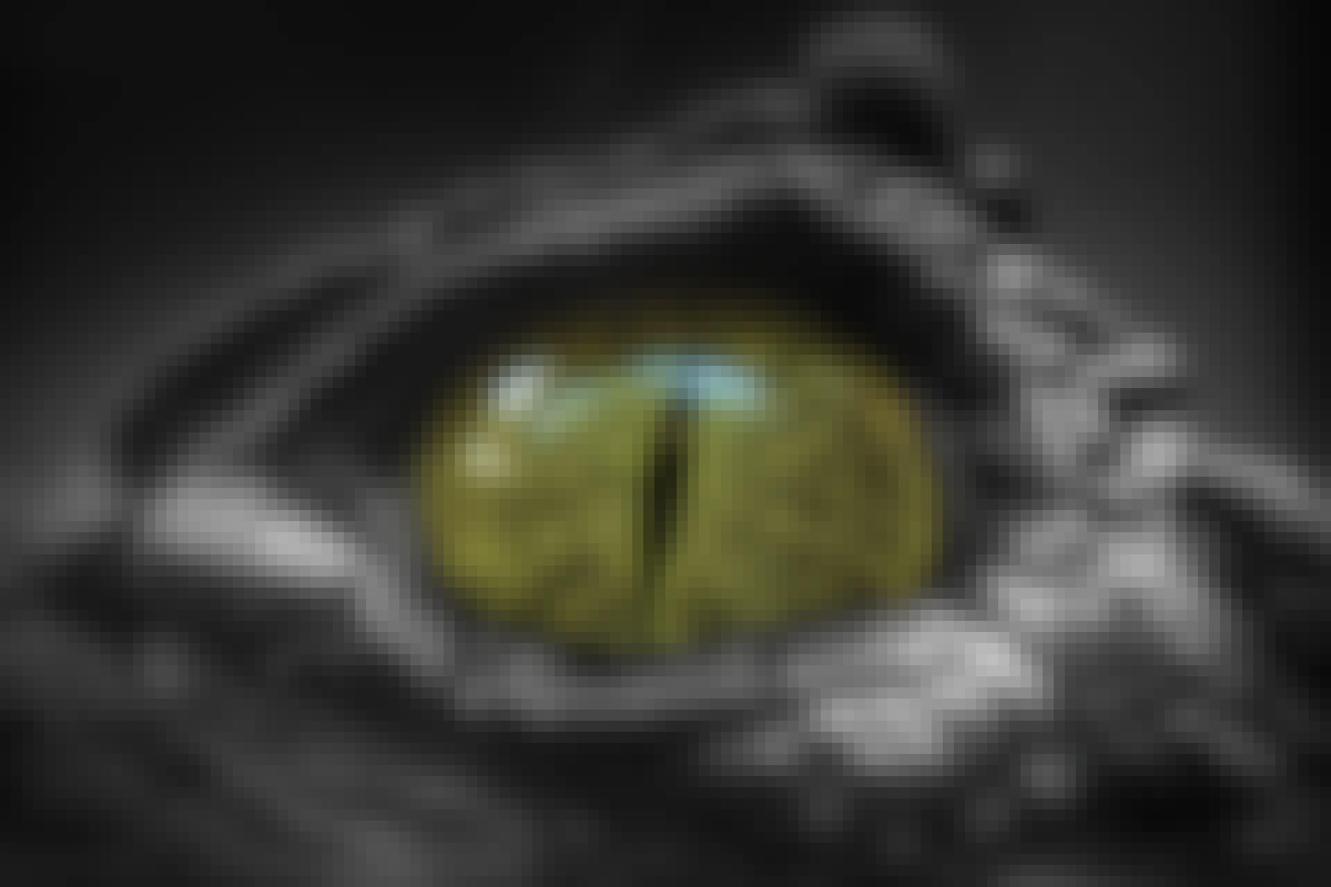 Krokotiilin pupilli –peto