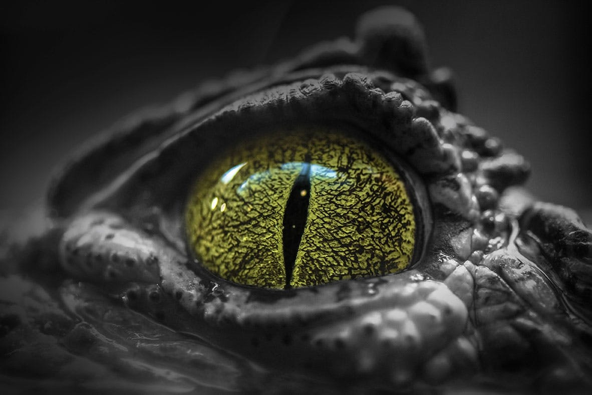 Krokodillenpupil roofdier